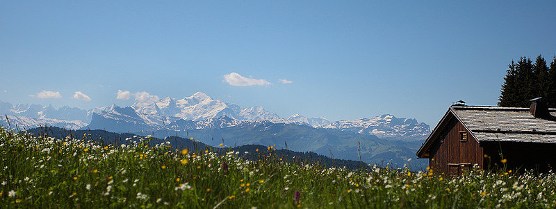 summer view of wild flowers and mont blanc